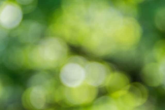 【風水で金運アップ】緑色の財布で金運が着実にアップ