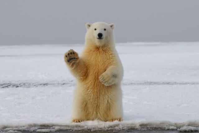られる くま に 夢 追いかけ 夢占い「熊に追いかけられる」夢の診断結果9選