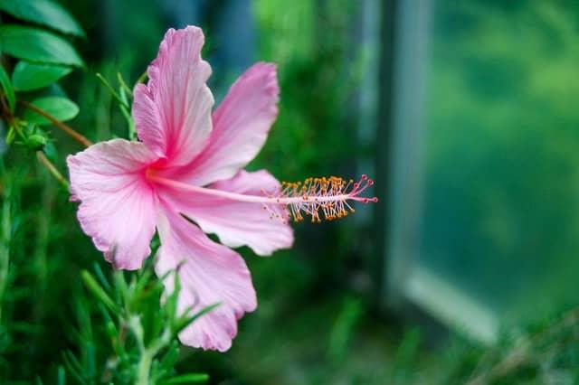 【夢占い】沖縄の夢の意味。一人、恋人、家族、友達、無人島、迷子、泳ぐ、眺めるなど
