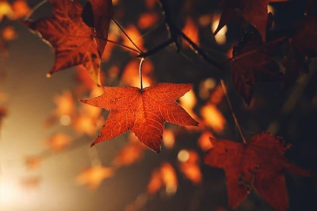 秋の夢の意味とは?(夢占い)