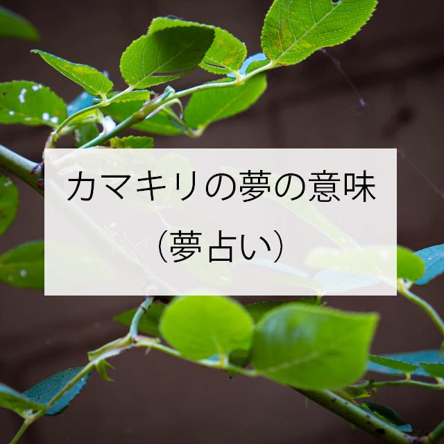 カマキリの夢の意味とは(夢占い)