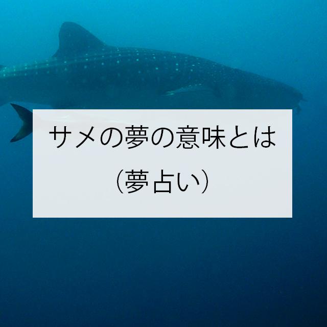 サメの夢の意味とは(夢占い)