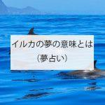 イルカの夢の意味とは?(夢占い)