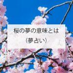 桜の夢の意味!(夢占い)