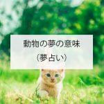動物の夢の意味(夢占い)