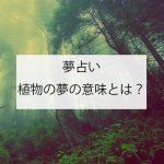 植物の夢の意味とは?(夢占い)基本的な意味と心理を徹底解説